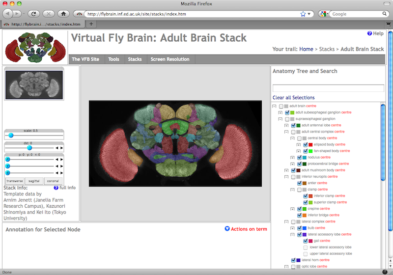 A Virtual Fly Brain Actionpotential