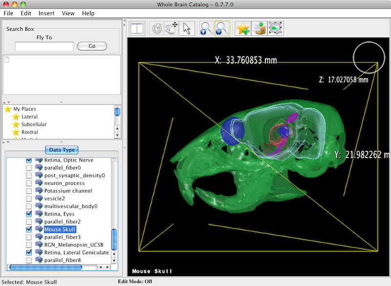 Mouse skull viewed in Whole Brain Catalog